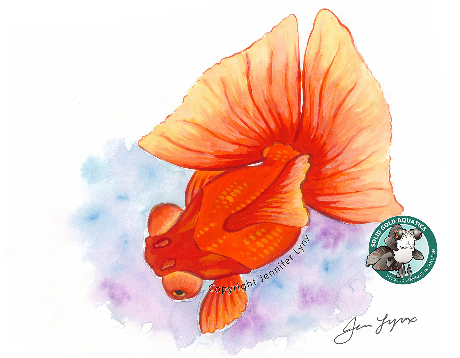 Red butterfly goldfish art print solid gold aquatics for Solid gold fish
