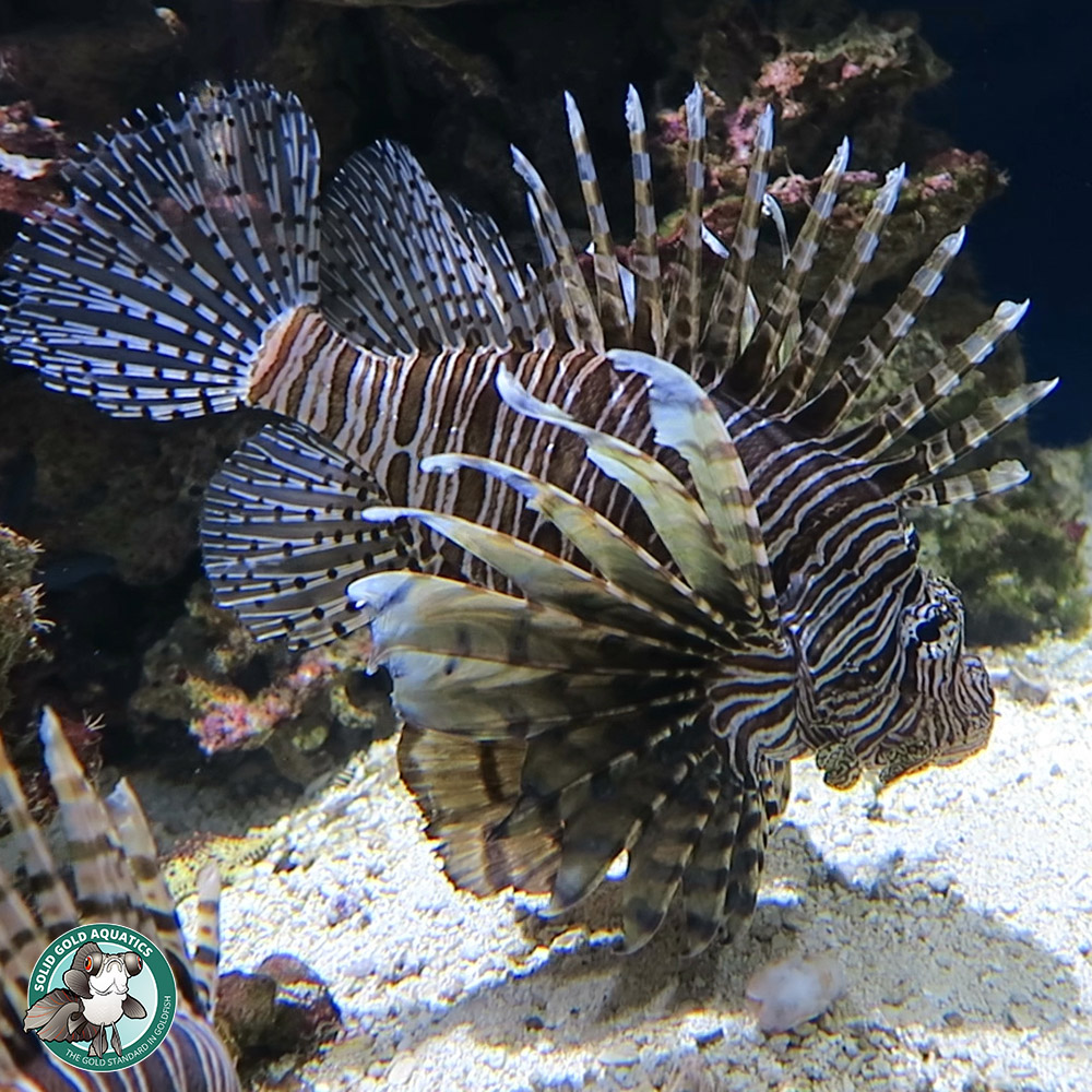 wowza color changing cuttlefish moray eels and more u2013 solid