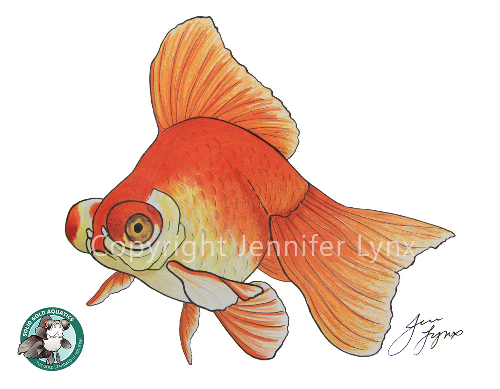 butterfly telescope goldfish drawing