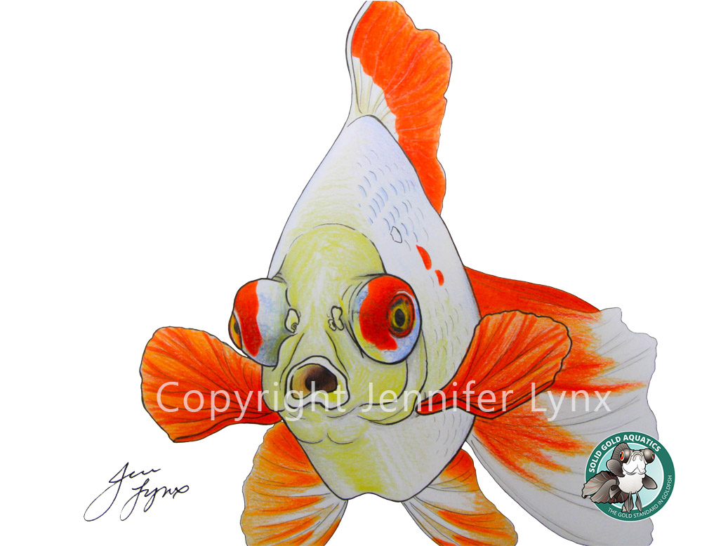clyde the butterfly telescope goldfish