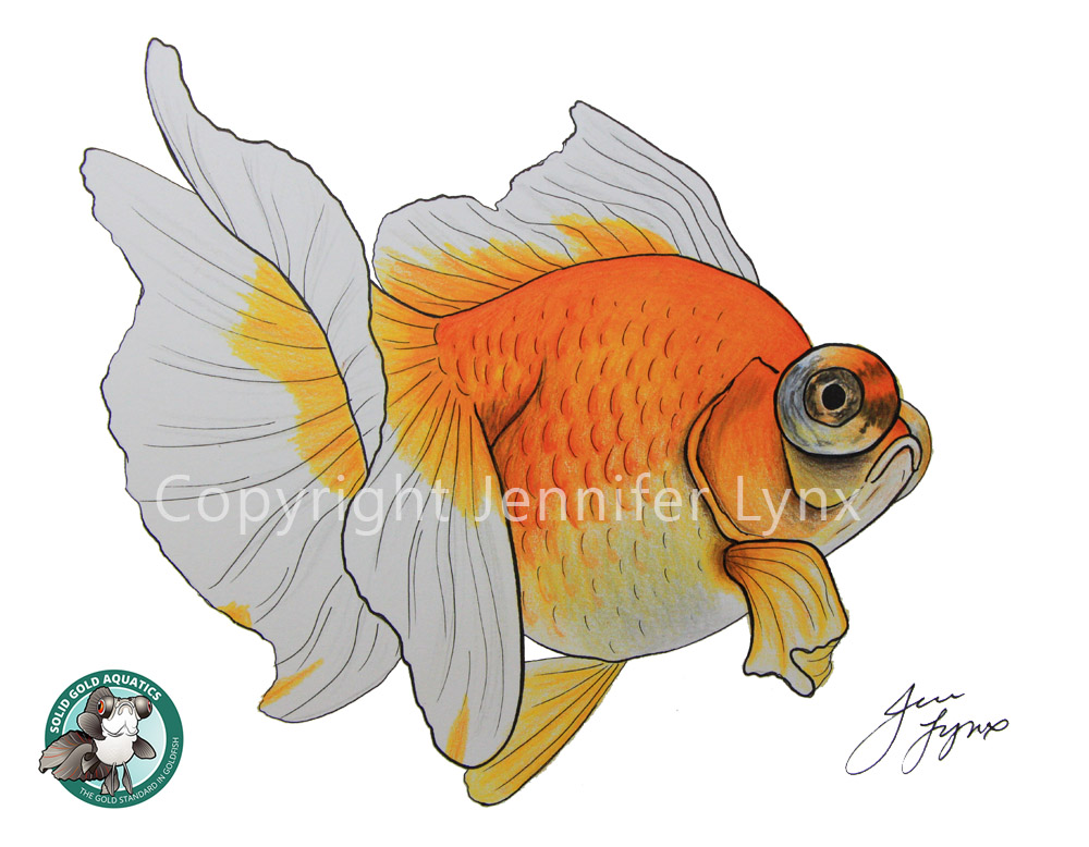 yellow butterfly telescope goldfish